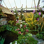 MCBEANS ORCHIDS DISPLAY, (RHS GOLD MEDAL WINNER), RHS CHELSEA SHOW 1995.