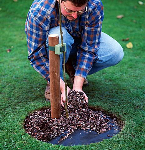 TREE_PLANTING_STEP_9_OF_9_COVERING_MEMBRANE_WITH_MULCH