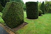 ROW OF SHAPES BASED ON EUCLIDEAN GEOMETRY,  IN YEW (TAXUS BACCATA). TOPIARY GARDEN