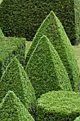 TOPIARY GARDEN BASED ON EUCLIDEAN GEOMETRY,  IN YEW (TAXUS BACCATA) AND BOX (BUXUS SEMPERVIRENS). TOPIARY GARDEN