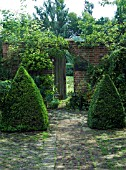 COURTYARD WITH BOX PYRAMIDS (BUXUS SEMPERVIRENS) FLANK GATEWAY.  ALSO INC. EUPHORBIA,  HONESTY & CLIMBING ROSES.