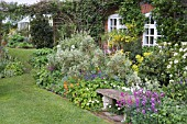STONE BENCH WITH BORDER IN FRONT OF COTTAGE; KITCHEN GDN WITH GREENHOUSE IN BGD. ERYSIMUM BOWLES MAUVE,  ERYSIMUM APRICOT DELIGHT,  MARGUERITE,  CHOISYA TERNATA,  GENISTA (BROOM),   EUPHORBIA MELLIFERA