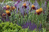 TELEGRAPH GARDEN,  DES. TOM STUART SMITH. IRISES WITH SALVIA,  NEPETA RACEMOSA WALKERS LOW. CHELSEA 2006