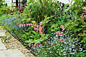 SPRING BORDER,  WITH DICENTRA SPECTABILIS (BLEEDING HEART,  LADY IN THE BATH),  MYOSOTIS SYLVATICA (SYN. M. ALPESTRIS,  FORGET ME NOT),