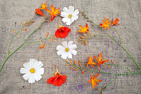 STILL_LIFE_WITH_COSMOS_PURITY_NASTURTIUM_AND_CROCOSMIA_FLOWERS