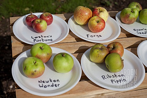 HARVESTED_APPLES