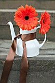 GERBERA IN TEAPOT