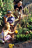 FAMILY TENDING VEGETABLES IN NEW POTAGER GARDEN IN SUMMER
