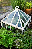VICTORIAN STYLE METAL & GLASS PLANT PROTECTOR CLOCHES WITH MIX OF HERB & SALAD LEAF PLANTS