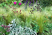 PERENNIAL BORDER IN THE CANCER RESEARCH UK GARDEN,  DESIGN ANDY STURGEON