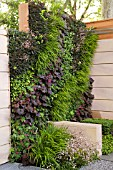 LIVING WALL PLANTING - THE MARSHALLS LIVING STREET. DESIGN BY IAN DEXTER, SPONSOR MARSHALLS PLC.