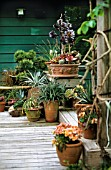 TERRACOTTA CONTAINERS WITH DROUGHT TOLERANT PLANTING OF SUCCULENTS, EVERGREEN TREES & FLOWERING PERENNIALS ON A WOODEN PATIO DECK AT THE FORMER HOME OF DAN HINKLEY, HERONSWOOD NURSERY, WASHINGTON STATE, USA.