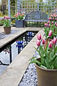TULIPA BALLADE AND TULIPA LA BELLE EPOQUE SURROUNDING A RILL