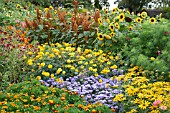 AGERATUM, RUDBECKIA, MARIGOLD, AMARANTHUS AND SUNFLOWERS