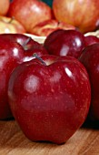 MALUS DOMESTICA RED DELICIOUS, (APPLE RED DELICIOUS)