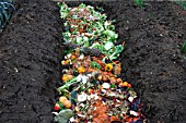 TRENCH COMPOSTING KITCHEN WASTE