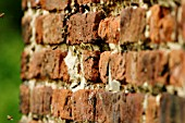 HONEY BEES NESTING IN WALL