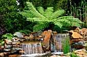 DICKSONIA ANTARCTICA (AGM), (HARDY TREE FERN) BEHIND WATERFALL