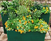 CONTAINERS WITH VEGETABLES AND TROPAEOLUM ALASKA