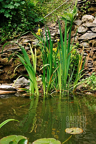 WILDLIFE_POND__EARLY_SUMMER