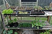 GREENHOUSE STAGING WITH ASSORTED POTS AND TRAYS