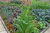 DECORATIVE VEGETABLE BED IN JULY