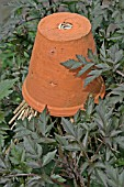 EARWIG TRAP MADE FROM UPTURNED FLOWERPOT AND STRAW