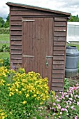 ALLOTMENT SHED IN SUMMER