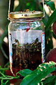 WASP TRAP,  WATER AND JAM IN JAM JAR