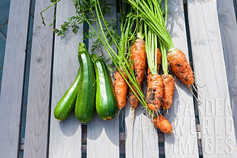 Harvest_of_zucchini_and_carrots_in_a_garden