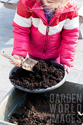 Sowing_of_scarlet_runner_bean_by_a_little_girl_in_a_garden