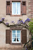 Wisteria in bloom on a house