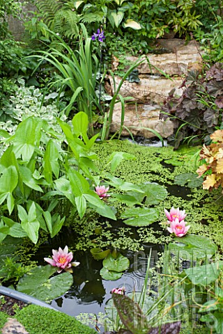 Small_flowered_garden_pond_with_cascade