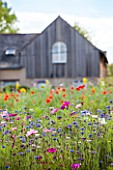 Flowered meadow in front of a barn