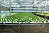 Vegetable seedlings. Lufa Farms. Montreal. Province of Quebec. Canada