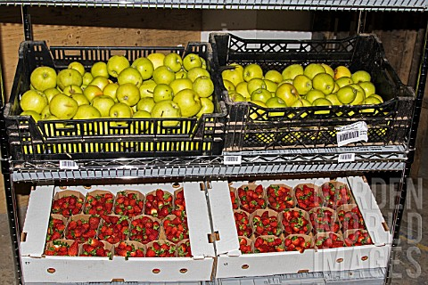 Apples_and_Strawberries_prepared_for_sale_to_individuals_Lufa_Farms_Montreal_Province_of_Quebec_Cana