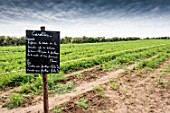 Carrot field with instructions written in French
