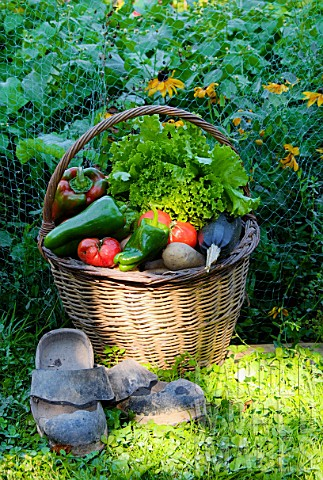 Basket_of_mixed_vegetables_tomatoes_peppers_lettuce_zucchini_potatoes_and_wooden_shoes