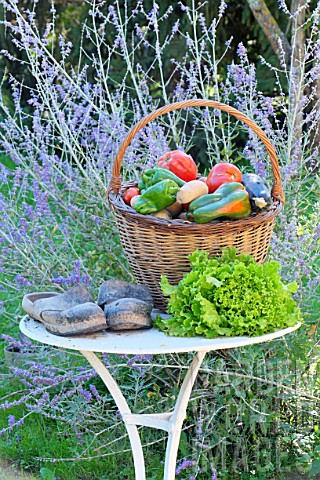 Basket_of_assorted_vegetables_tomatoes_peppers_lettuce_zucchini_potatoes_and_wooden_shoes_zinc_water