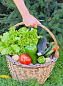 Woman holding a basket of assorted vegetables and zinc watering can plus tomatoes, peppers, lettuce, zucchini, potatoes
