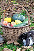 Basket of various autumn vegetables: pumpkin, zucchini, apples, nuts and dwarf rabbit