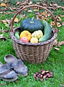 Basket of various autumn vegetables: pumpkin, zucchini, apples, walnuts, chestnuts, pairs of shoes