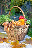 Basket of various autumn vegetables: pumpkin, zucchini, peppers, carrots.