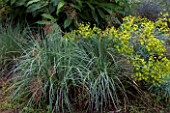 Schizachyrium scoparium Blue heaven and Euphorbia in summer