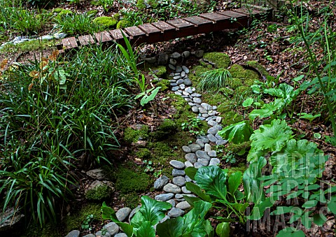 River_pebbles_lined_with_Darmera_peltata_Luzula_sylvatica_and_Bergenia