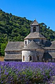 Lavender in bloom and Senanque Abbey in Provence - France