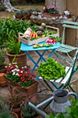 Pring vegetables on a garden terrace: carrots, aspargus, radish, artichokes, salad, peas, snow peas - France