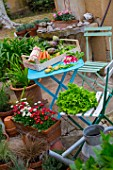 Vegetables on a garden terrace: carrots, asparagus, radish, artichokes, salad, peas, snow peas - France