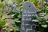 Borago officinalis and French quote on slate, in medieval garden , Saint-Valery-sur-Somme , Picardy, France