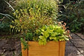 Preparation and planting in a wooden container, finished container.